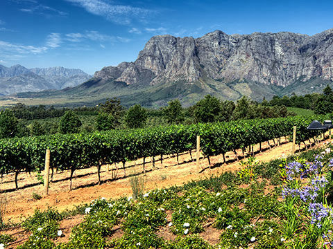 winelands thumbnail